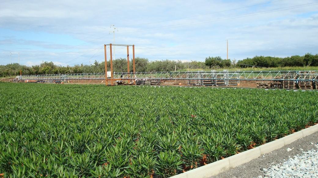 Irrigazione for Irrigazione serra